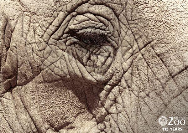 прикольная реклама зоопарка 12 (600x425, 99Kb)