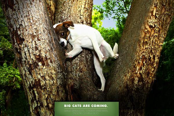 прикольная реклама зоопарка 15 (600x400, 75Kb)