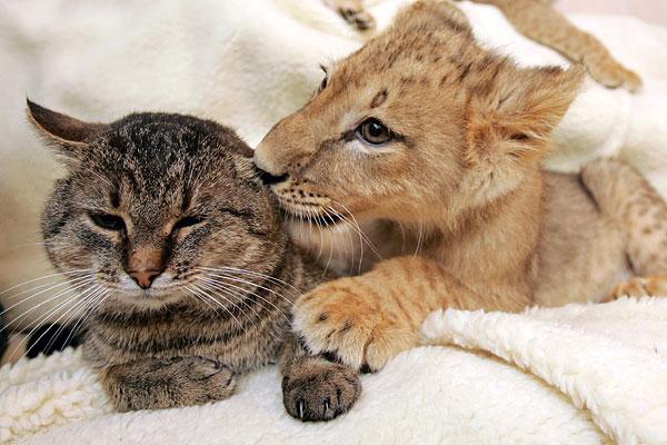 дружба животных.jpg5 (600x400, 68Kb)