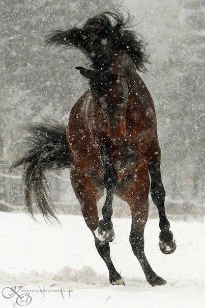 конь (403x604, 70Kb)