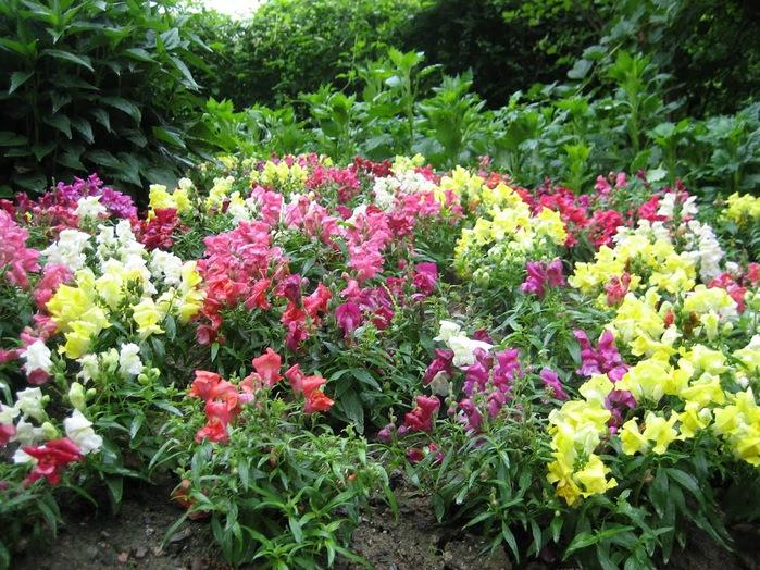 Сады замка Траутмансдорф 55970