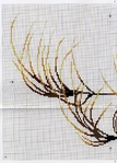 Превью DMC Linen Thread Plants9 (502x700, 324Kb)