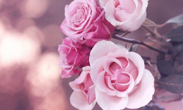 roses (600x362, 42Kb)