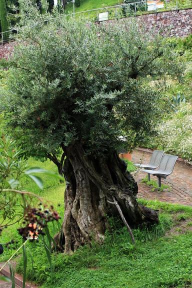 Сады замка Траутмансдорф 41981
