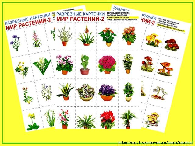 мир-растений-2 (640x480, 210Kb)