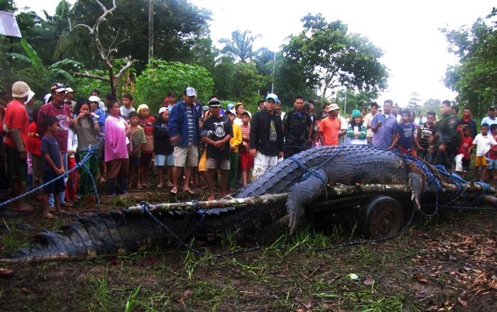 крокодил (700x440, 173Kb)