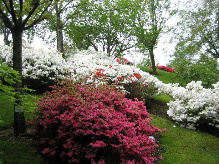 Сады замка Траутмансдорф 27416