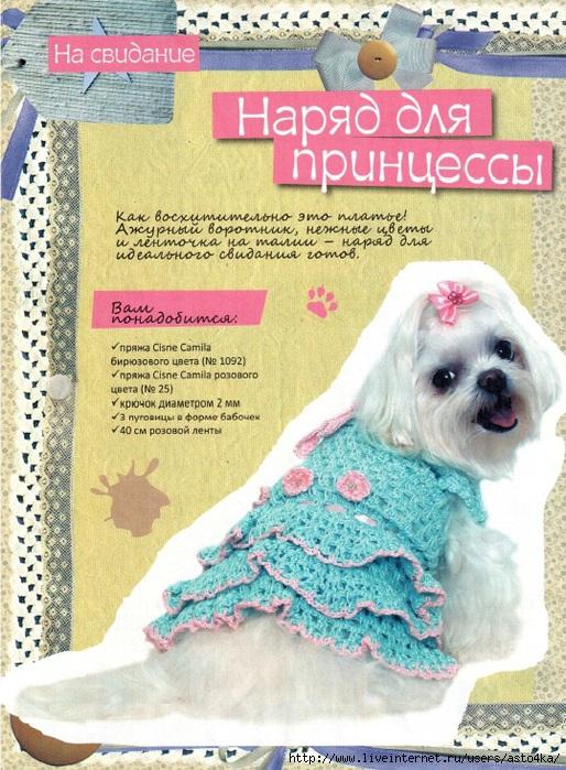 Lt b gt вязание lt b gt для lt b gt собак lt b gt самое интересное в блогах