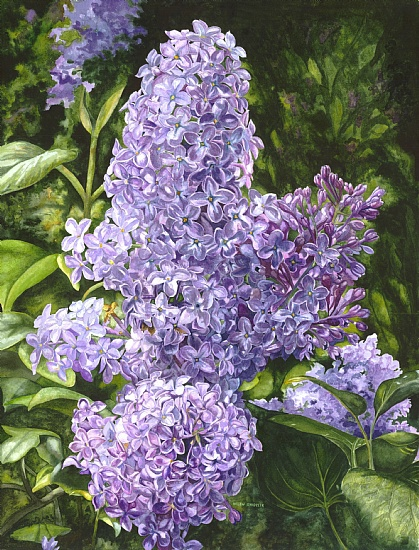 amethyst-lilacs (419x550, 160Kb)