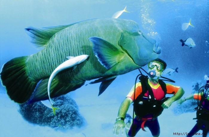 подводный мир27 (700x459, 176Kb)