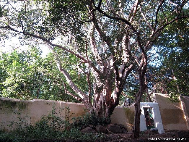 Индия, Тируваннамалай, 2012, 31 (640x480, 426Kb)