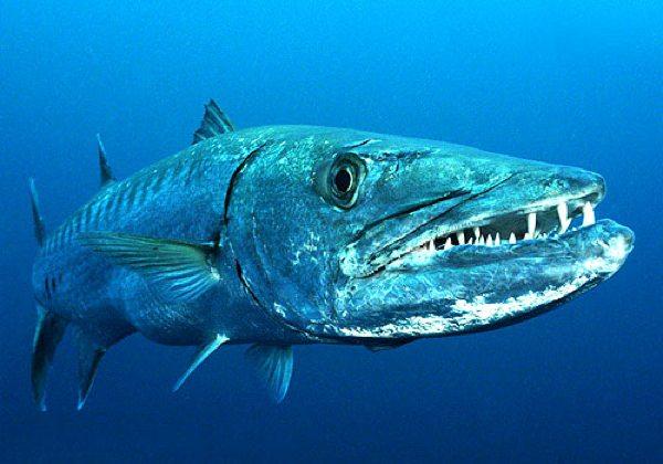 выпуска парфюма: рыба бояра где водится ароматов: большой миф