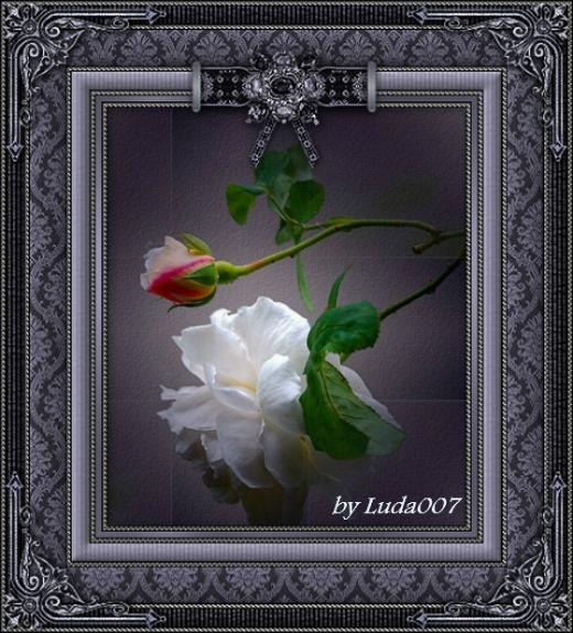 3427527_rose_1_ (520x575, 656Kb)