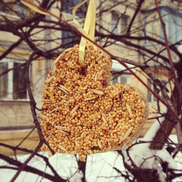 Как сделать корм для птиц своими руками
