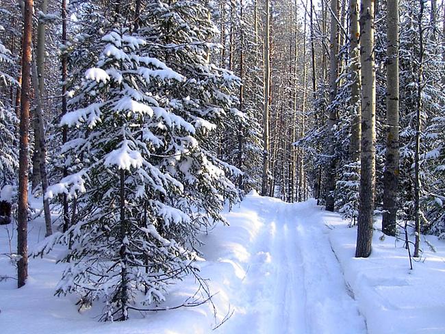 """Схема вышивки  """"зимний лес """" ."""