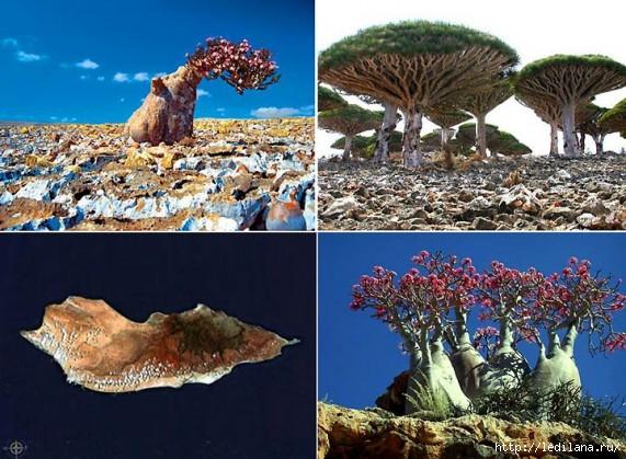 деревья- (571x419, 197Kb)