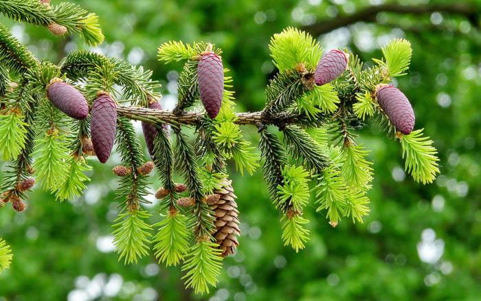 http://immunar.ru/uploads/2009/05/s-54.jpg/1358066618_kartinki24_trees_0015_2 (700x438, 124Kb)