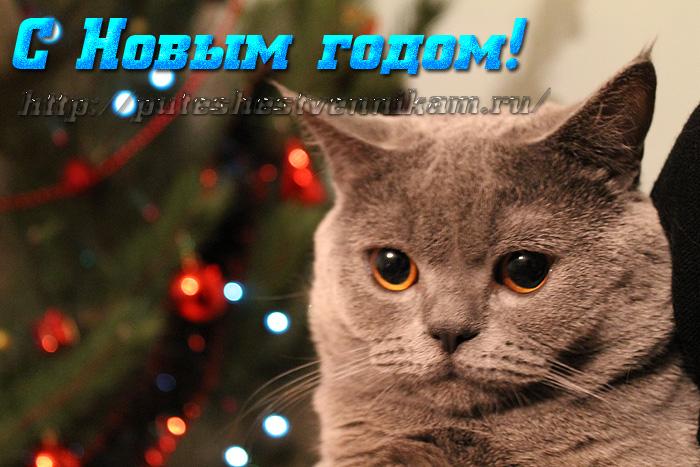 Открытки с котом с новым годом (700x467, 173Kb)