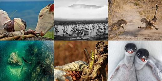 Лучшие фотографии недели 7-13 января от National Geographic