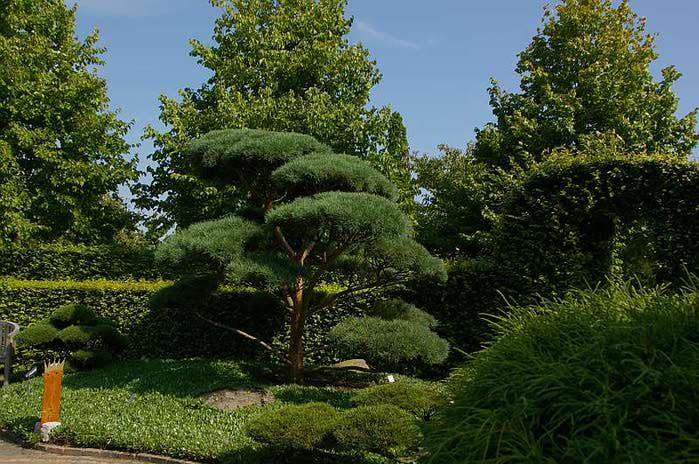 Бад Цвишенан : Park der Garten 13735