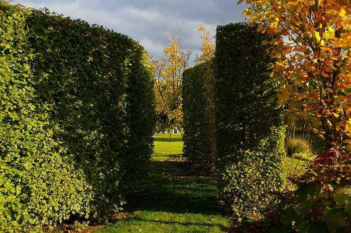 Бад Цвишенан : Park der Garten 67377