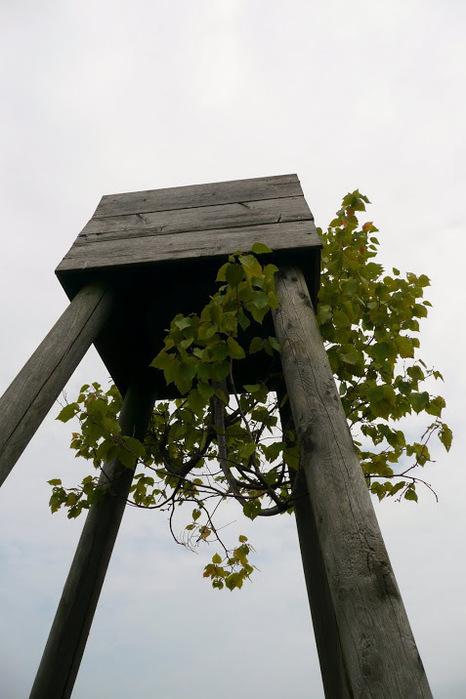 Бад Цвишенан : Park der Garten 75085