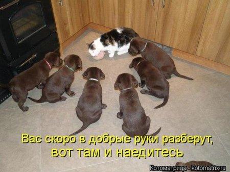 1356105264_kotomatrix_47 (450x337, 35Kb)