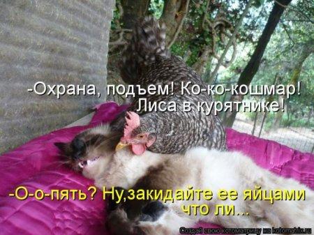 1356105262_kotomatrix_49 (450x337, 47Kb)