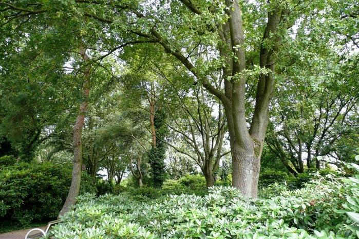 Бад Цвишенан : Park der Garten 81514