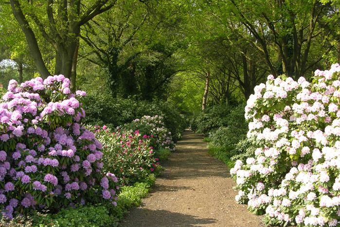 Бад Цвишенан : Park der Garten 73021