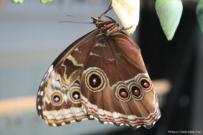 бабочка20 (700x466, 156Kb)