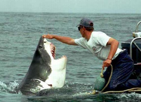 человек и акула 1 (575x415, 37Kb)