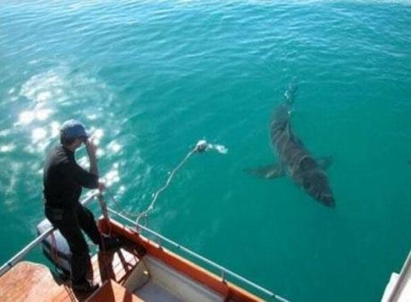 человек и акула 3 (460x338, 40Kb)