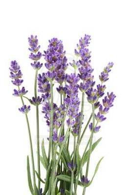 вышивка лентами-мастер класс-цветы (266x400, 16Kb)