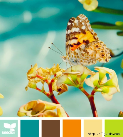 design_seeds_color_palette_butterfly_hues_post (419x466, 111Kb)