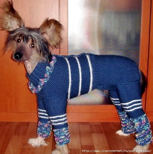 Мы своей собачке тоже сами шили комбинезон.  Только вот не из ниток вязали, а из старой куртки.Я думаю...