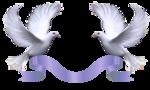 Превью Голуби_на_прозрачном_слое (18) (500x301, 155Kb)