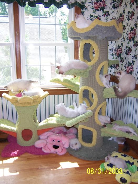 Домик для кошки несложно сделать своими руками, к тому же, это недорого стоит и не отнимет много времени.