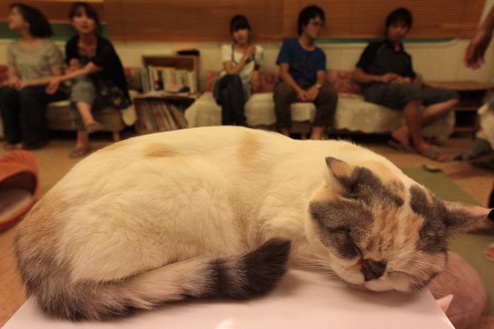 Cat cafe кошачье кафе в осаке  (700x466, 109Kb)