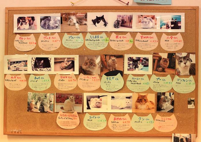 Cat cafe кошачье кафе в осаке 6 (700x495, 205Kb)