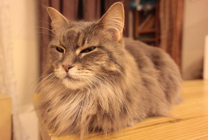 Cat cafe кошачье кафе в осаке 8 (700x472, 115Kb)