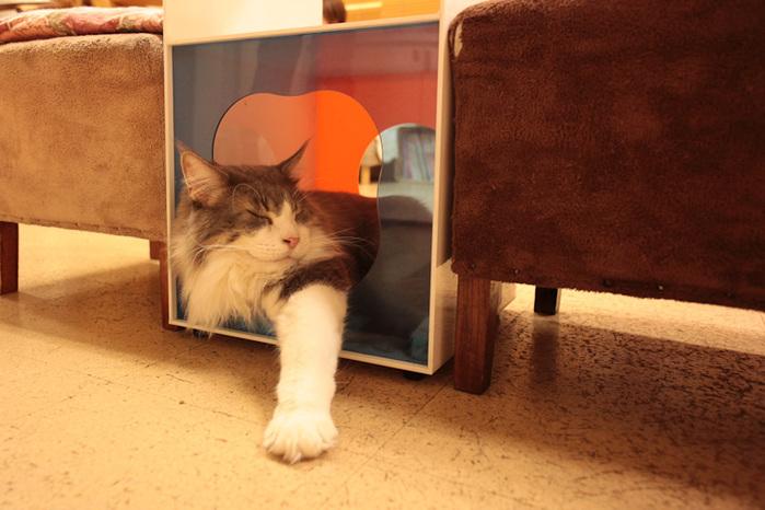 Cat cafe кошачье кафе в осаке 15 (700x466, 124Kb)