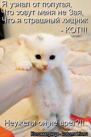 kotomatritsa_a2 (319x480, 26Kb)