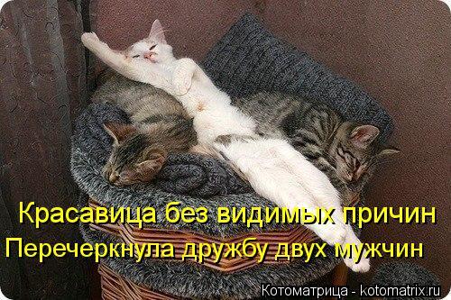 kotomatritsa_f8 (500x333, 60Kb)