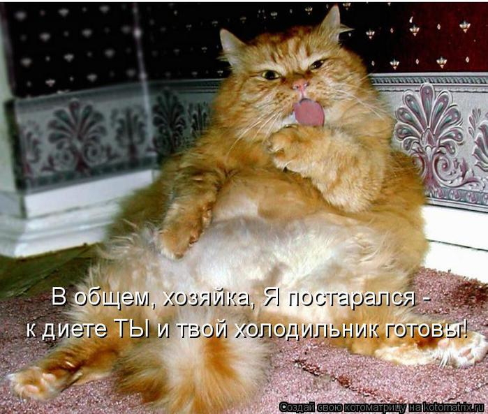 kotomatritsa_uR (700x593, 78Kb)