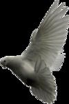 Превью Голуби (5) (100x149, 19Kb)