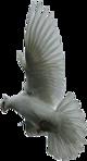 Превью Голуби (7) (80x148, 17Kb)