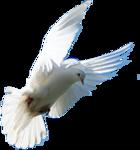 Превью Голуби (15) (140x150, 22Kb)