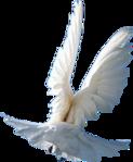 Превью Голуби (17) (123x149, 23Kb)
