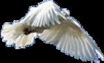 Превью Голуби (19) (150x91, 21Kb)